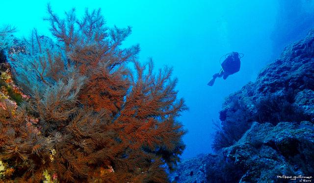 Canary Sea